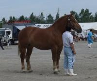 最高位馬.JPG