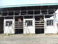 s11.06当歳馬展示会2.jpg