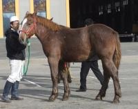 s11.06当歳馬展示会3.jpg