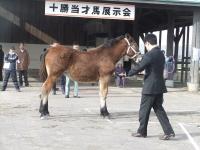 s11.06当歳馬展示会4.jpg